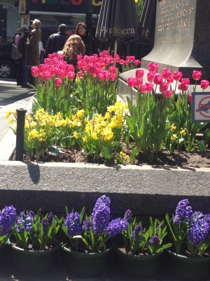 Flowers in Herald Square